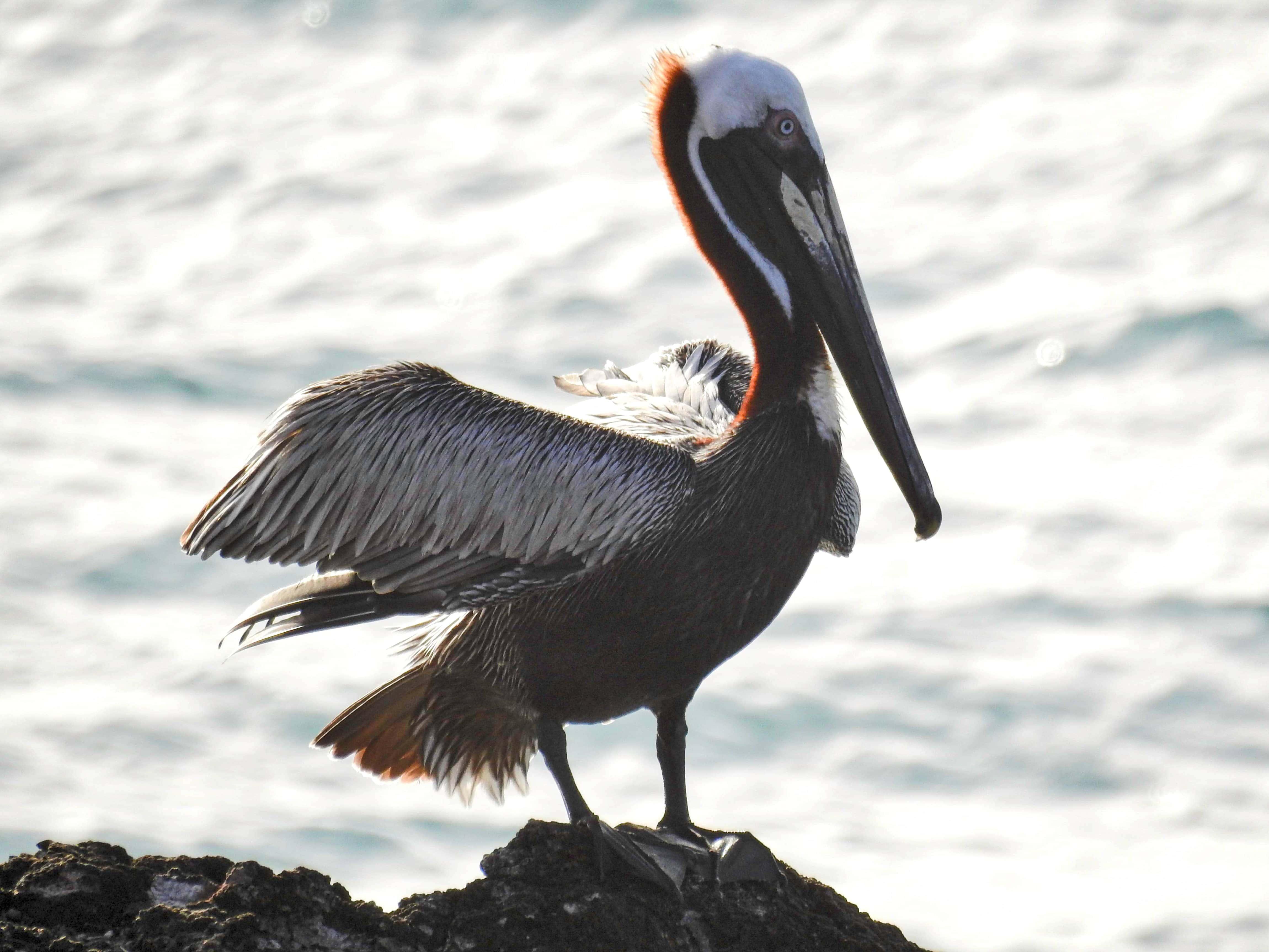 pp bird rock M